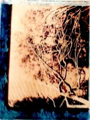 Polaroid - Metal Tree 01