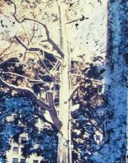 Polaroid - Metal Tree 02