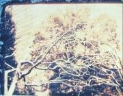 Polaroid - Metal Tree 03